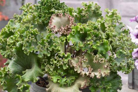 La Forêt - Solutions Plants, Les Sorinières (44).