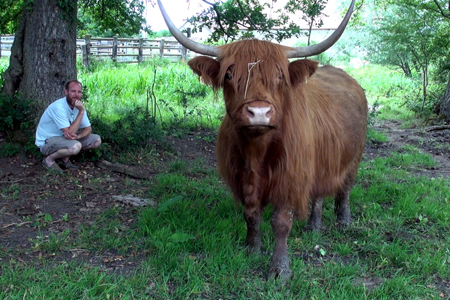 Vente directe : La Highland Cattle, entre robustesse, qualité et originalité (©AM)